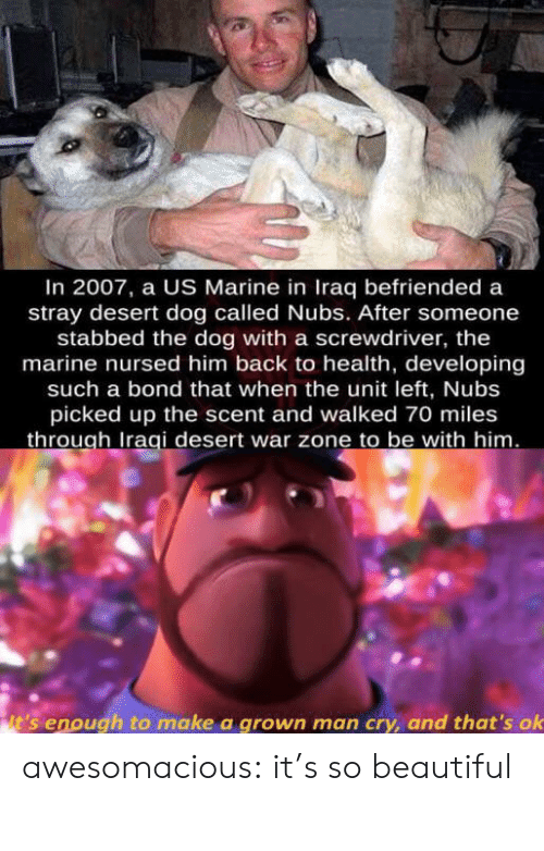 Iraq: In 2007, a US Marine in Iraq befriended a  stray desert dog called Nubs. After someone  stabbed the dog with a screwdriver, the  marine nursed him back to health, developing  such a bond that when the unit left, Nubs  picked up the scent and walked 70 miles  through Iraqi desert war zone to be with him.  it's enough to make a grown man cry, and that's ok awesomacious:  it's so beautiful