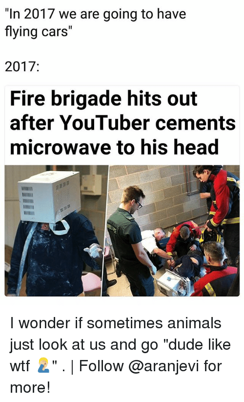 """Animals, Cars, and Dude: """"In 2017 we are going to have  flying cars""""  2017:  Fire brigade hits out  after YouTuber cements  microwave to his head I wonder if sometimes animals just look at us and go """"dude like wtf 🤦🏼♂️"""" . 
