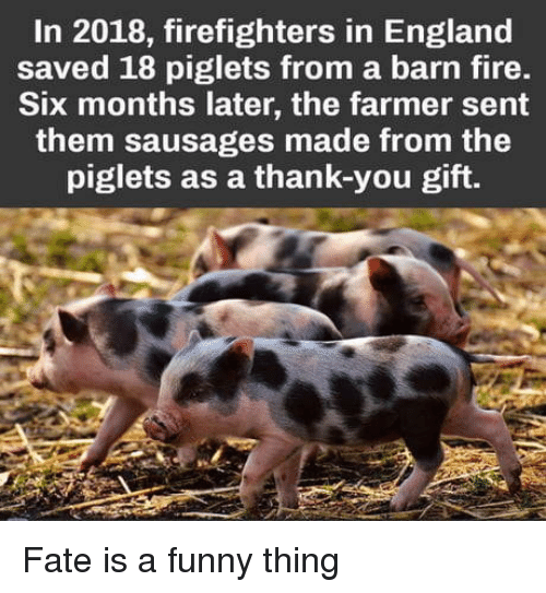 piglets: In 2018, firefighters in England  saved 18 piglets from a barn fire.  Six months later, the farmer sent  them sausages made from the  piglets as a thank-you gift. Fate is a funny thing