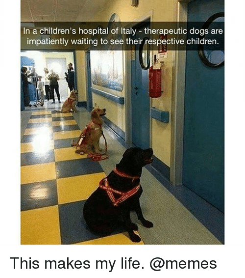 Life Memes: In a children's hospital of Italy therapeutic dogs are  impatiently waiting to see their respective children. This makes my life. @memes