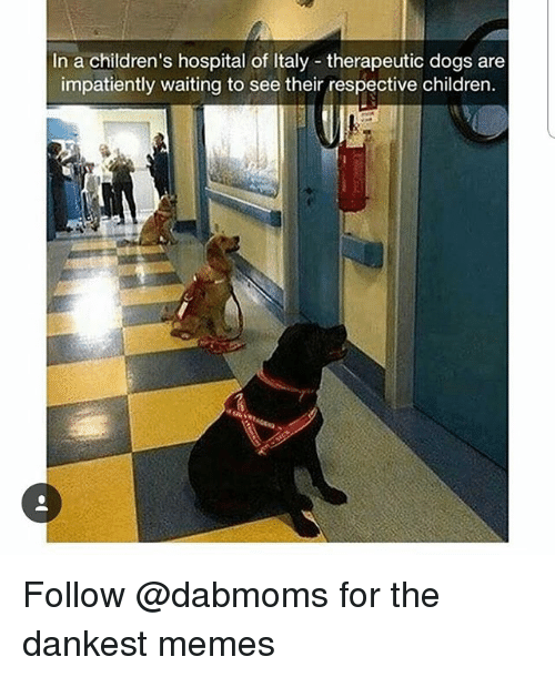 Children's Hospital: In a children's hospital of Italy therapeutic dogs are  impatiently waiting to see their respective children. Follow @dabmoms for the dankest memes