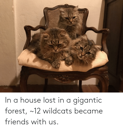 gigantic: In a house lost in a gigantic forest, ~12 wildcats became friends with us.