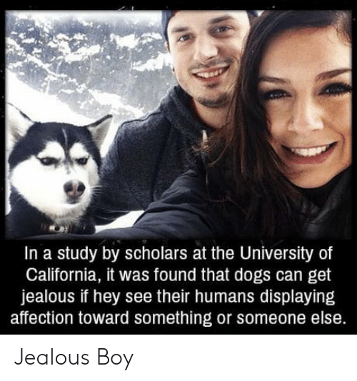 Scholars: In a study by scholars at the University of  California, it was found that dogs can get  jealous if hey see their humans displaying  affection toward something or someone else. Jealous Boy