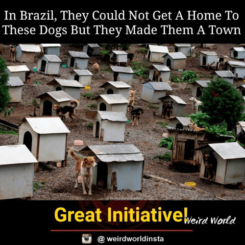 Brazil: In Brazil, They Could Not Get A Home To  These Dogs But They Made Them A Town  Bi  Great Initiativeeid woda  @ weirdworldinsta