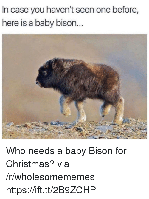 bison: In case you haven't seen one before,  here is a baby bison Who needs a baby Bison for Christmas? via /r/wholesomememes https://ift.tt/2B9ZCHP