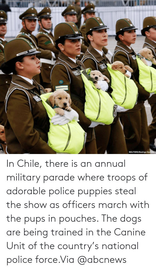 country: In Chile, there is an annual military parade where troops of adorable police puppies steal the show as officers march with the pups in pouches. The dogs are being trained in the Canine Unit of the country's national police force.Via @abcnews