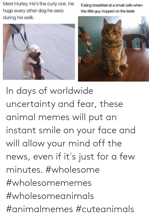 Mind: In days of worldwide uncertainty and fear, these animal memes will put an instant smile on your face and will allow your mind off the news, even if it's just for a few minutes. #wholesome #wholesomememes #wholesomeanimals #animalmemes #cuteanimals