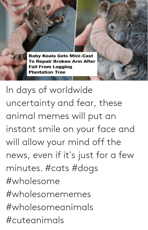 Mind: In days of worldwide uncertainty and fear, these animal memes will put an instant smile on your face and will allow your mind off the news, even if it's just for a few minutes. #cats #dogs #wholesome #wholesomememes #wholesomeanimals #cuteanimals