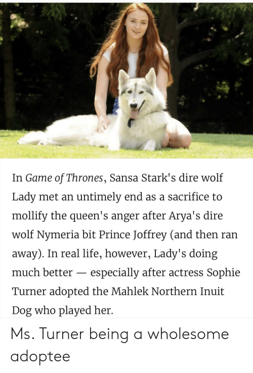 dire: In Game of Thrones, Sansa Stark's dire wolf  Lady met an untimely end as a sacrifice to  mollify the queen's anger after Arya's dire  wolf Nymeria bit Prince Joffrey (and then ran  away). In real life, however, Lady's doing  much better - especially after actress Sophie  Turner adopted the Mahlek Northern Inuit  Dog who played her. Ms. Turner being a wholesome adoptee