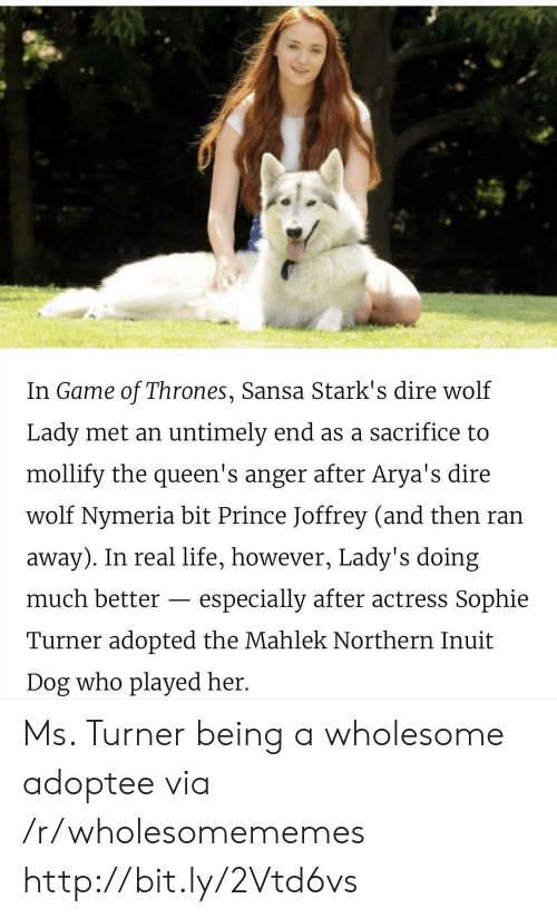 dire: In Game of Thrones, Sansa Stark's dire wolf  Lady met an untimely end as a sacrifice to  mollify the queen's anger after Arya's dire  wolf Nymeria bit Prince Joffrey (and then ran  away). In real life, however, Lady's doing  much better  especially after actress Sophie  Turner adopted the Mahlek Northern Inuit  Dog who played her. Ms. Turner being a wholesome adoptee via /r/wholesomememes http://bit.ly/2Vtd6vs
