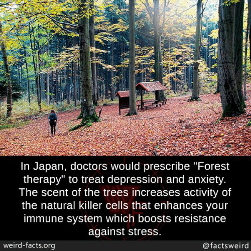 "Facts, Memes, and Weird: In Japan, doctors would prescribe ""Forest  therapy"" to treat depression and anxiety  The scent of the trees increases activity of  the natural killer cells that enhances vour  immune system which boosts resistance  against stress  weird-facts.org  @factsweird"