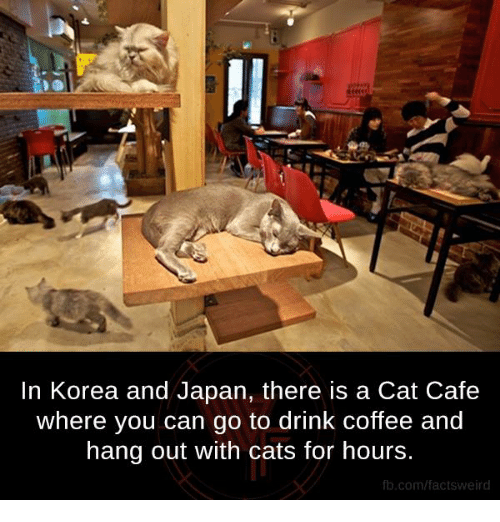 Drinking Coffee: In Korea and Japan, there is a Cat Cafe  where you can go to drink coffee and  hang out with cats for hours.  fb.com/facts weird