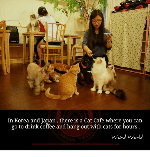 Drinking Coffee: In Korea and Japan, there is a Cat Cafe where you can  go to drink coffee and hang out with cats for hours  Weird World