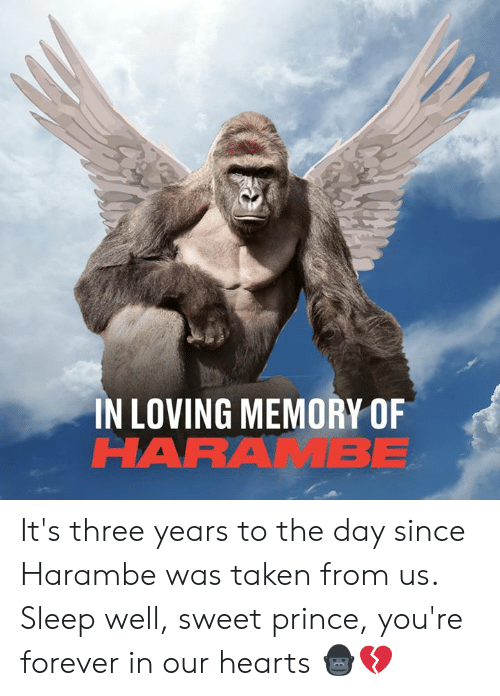 Dank, Prince, and Taken: IN LOVING MEMORY OF  HARAMBE It's three years to the day since Harambe was taken from us. Sleep well, sweet prince, you're forever in our hearts 🦍💔