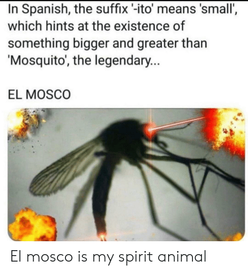 Bigger: In Spanish, the suffix -ito' means 'small',  which hints at the existence of  something bigger and greater than  Mosquito, the legendary...  EL MOSCO El mosco is my spirit animal