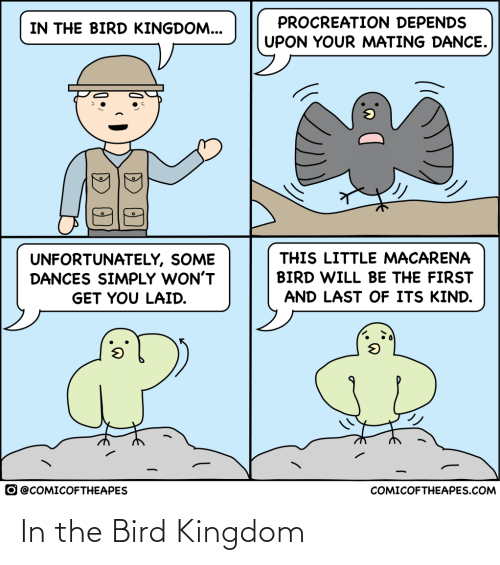the bird: In the Bird Kingdom