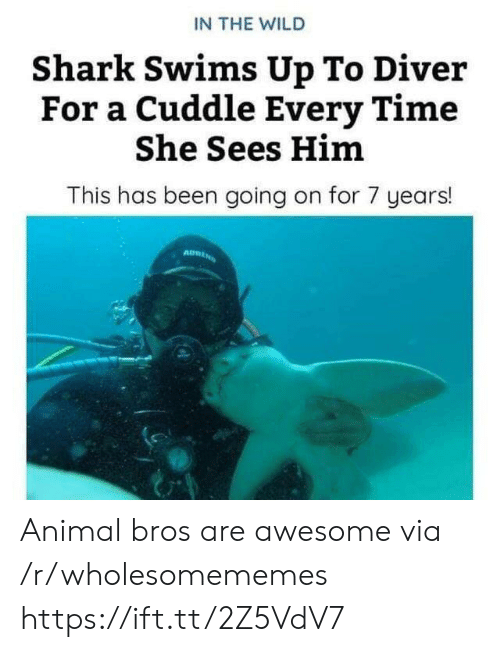 Shark, Animal, and Time: IN THE WILD  Shark Swims Up To Diver  For a Cuddle Every Time  She Sees Him  This has been going on for 7 years! Animal bros are awesome via /r/wholesomememes https://ift.tt/2Z5VdV7