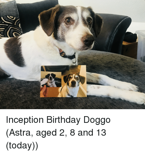 Birthday, Inception, and Today: Inception Birthday Doggo (Astra, aged 2, 8 and 13 (today))