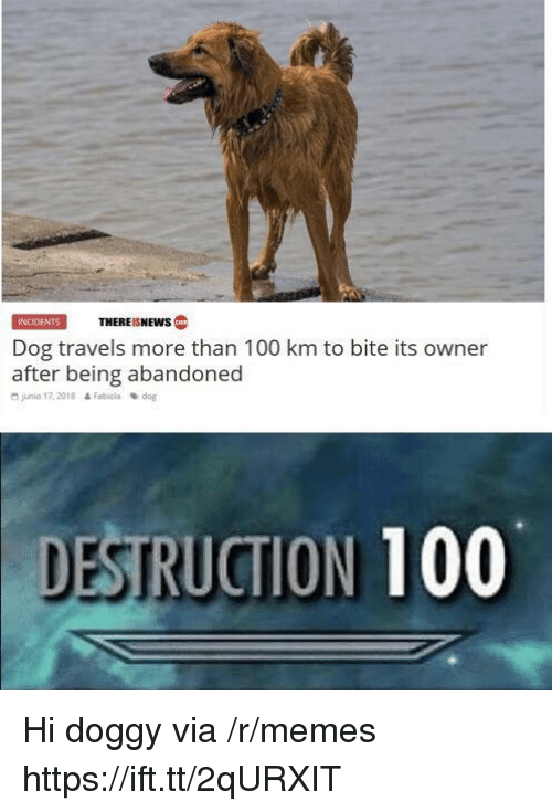 Anaconda, Memes, and Dog: INCIDENTSTHEREISNEWS  Dog travels more than 100 km to bite its owner  after being abandoned  junio 17, 2018  & Fabiola  dog  DESTRUCTION 100 Hi doggy via /r/memes https://ift.tt/2qURXIT