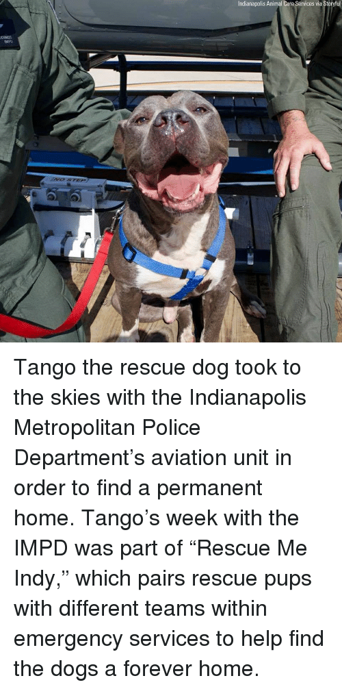 """Dogs, Memes, and Police: Indianapolis Animal Care Services via Storyful  MPD Tango the rescue dog took to the skies with the Indianapolis Metropolitan Police Department's aviation unit in order to find a permanent home. Tango's week with the IMPD was part of """"Rescue Me Indy,"""" which pairs rescue pups with different teams within emergency services to help find the dogs a forever home."""