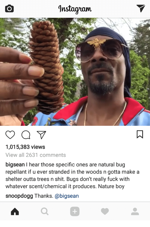 Bigsean: Instagram  1,015,383 views  View all 2631 comments  bigsean I hear those specific ones are natural bug  repellant if u ever stranded in the woods n gotta makea  shelter outta trees n shit. Bugs don't really fuck with  whatever scent/chemical it produces. Nature boy  snoopdogg Thanks. @bigsean  0