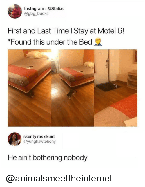 Instagram, Time, and Dank Memes: Instagram @Stali.s  @gbg_bucks  First and Last Time l Stay at Motel 6!  *Found this under the Bed  skunty ras skunt  @yunghawtebony  He ain't bothering nobody @animalsmeettheinternet