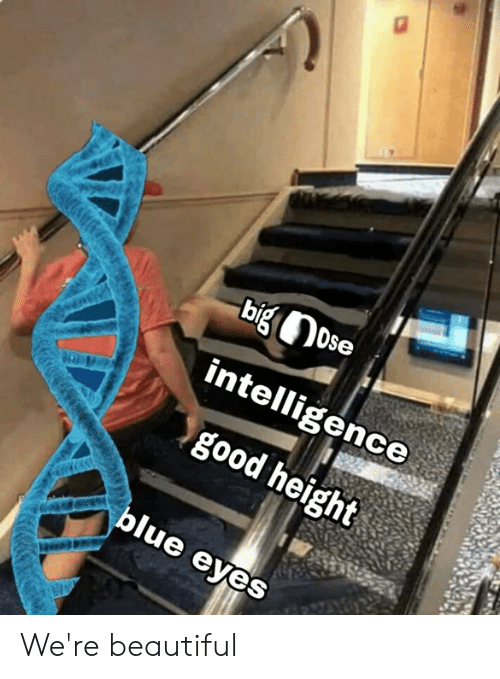 Beautiful, Memes, and Good: intelligence  good height  ue eyes We're beautiful