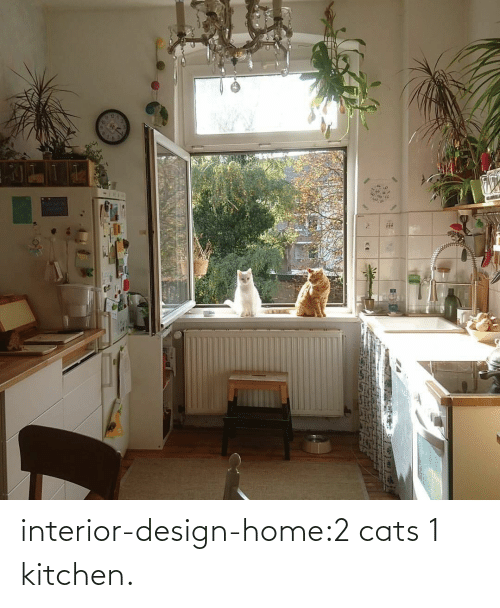 Home: interior-design-home:2 cats 1 kitchen.