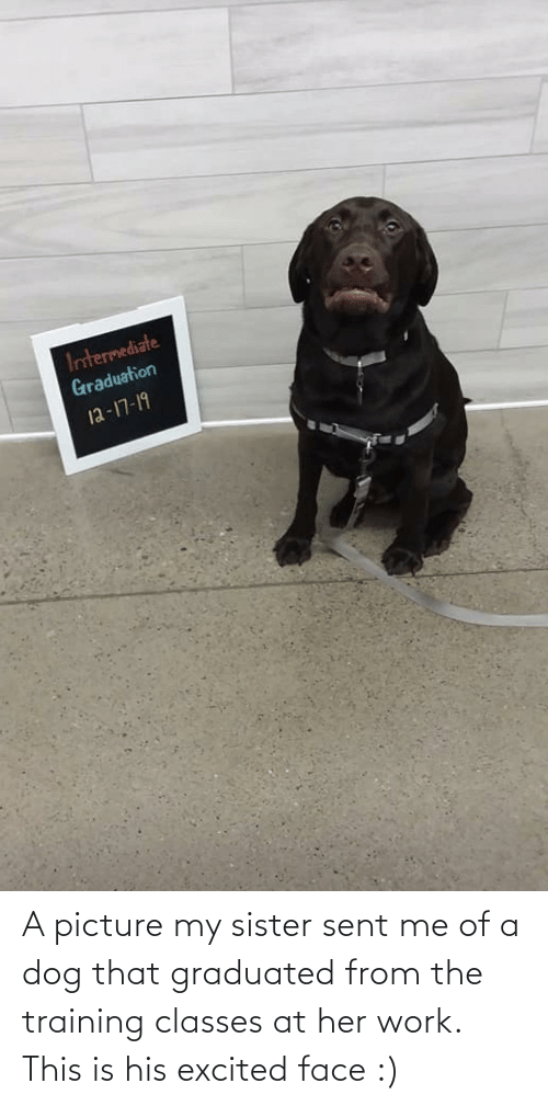 Classes: Intermediate  Graduation  12-17-19 A picture my sister sent me of a dog that graduated from the training classes at her work. This is his excited face :)