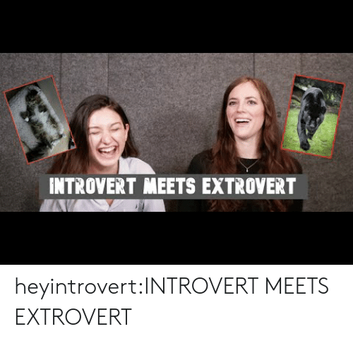 Introvert, Target, and Tumblr: INTROVERT MEETS EXTROVERT heyintrovert:INTROVERT MEETS EXTROVERT