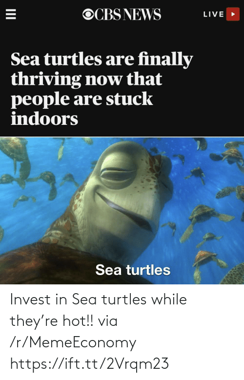 turtles: Invest in Sea turtles while they're hot!! via /r/MemeEconomy https://ift.tt/2Vrqm23