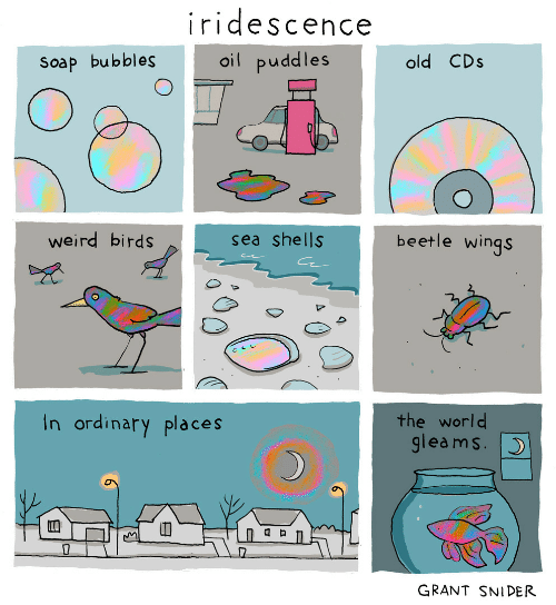 Weird, Birds, and Wings: iridescence  oil puddles  old CDs  Soap bubbles  beetle wings  weird birds  sea shells  the world  gleams.  In ordinary places  GRANT SNIDER