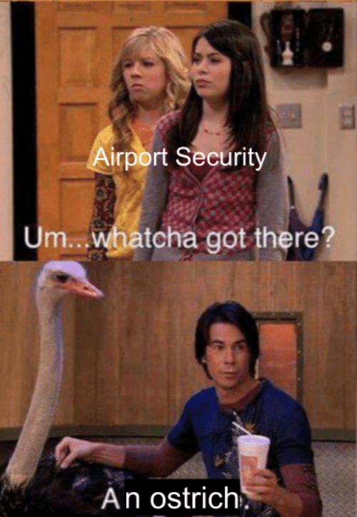 Got, Ostrich, and Security: irport Security  tcha got there?  An ostrich'.