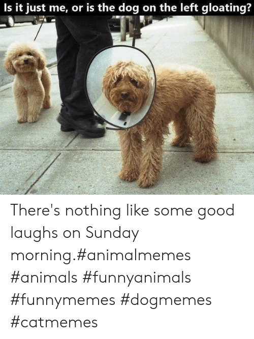 Is It Just Me: Is it just me, or is the dog on the left gloating? There's nothing like some good laughs on Sunday morning.#animalmemes #animals #funnyanimals #funnymemes #dogmemes #catmemes
