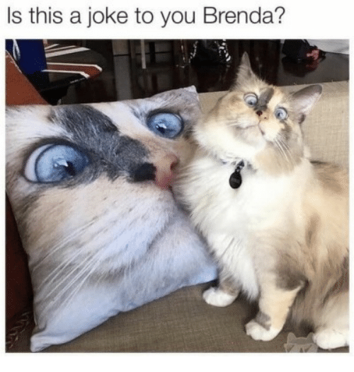 You, This, and Joke: Is this a joke to you Brenda?