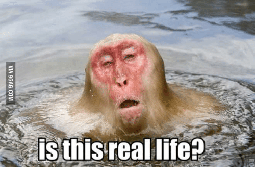 25 Best Memes About Is This Real Life Monkey Is This Real Life Monkey Memes