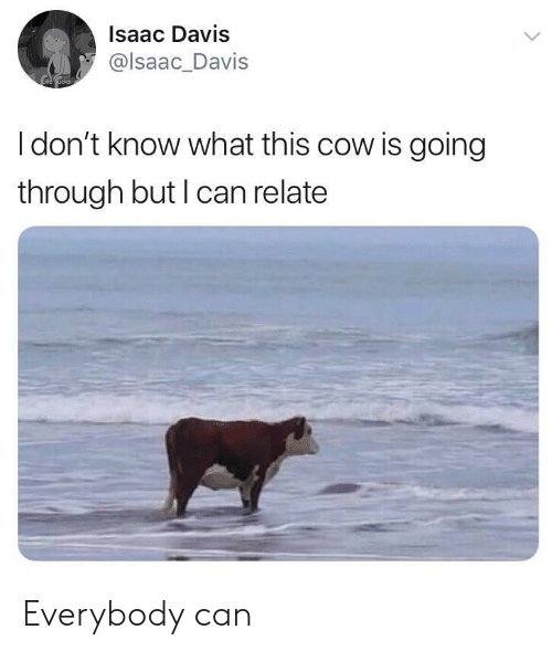 Davis, Isaac, and Cow: Isaac Davis  @lsaac_Davis  I don't know what this cow is going  through but I can relate Everybody can