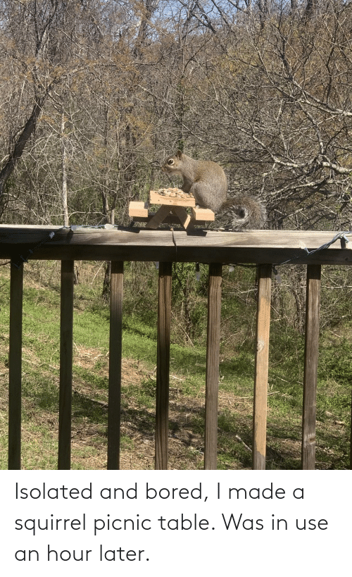 Squirrel: Isolated and bored, I made a squirrel picnic table. Was in use an hour later.