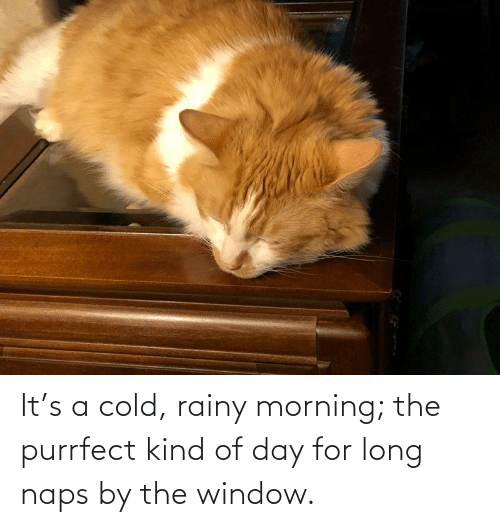 Naps: It's a cold, rainy morning; the purrfect kind of day for long naps by the window.