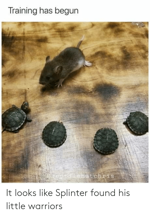 Found: It looks like Splinter found his little warriors