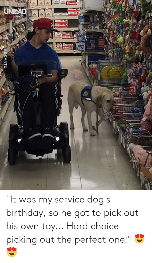 """Birthday, Dank, and Dogs: """"It was my service dog's birthday, so he got to pick out his own toy... Hard choice picking out the perfect one!"""" 😍😍"""