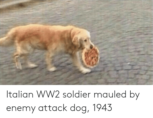 Ww2, Dog, and Soldier: Italian WW2 soldier mauled by enemy attack dog, 1943