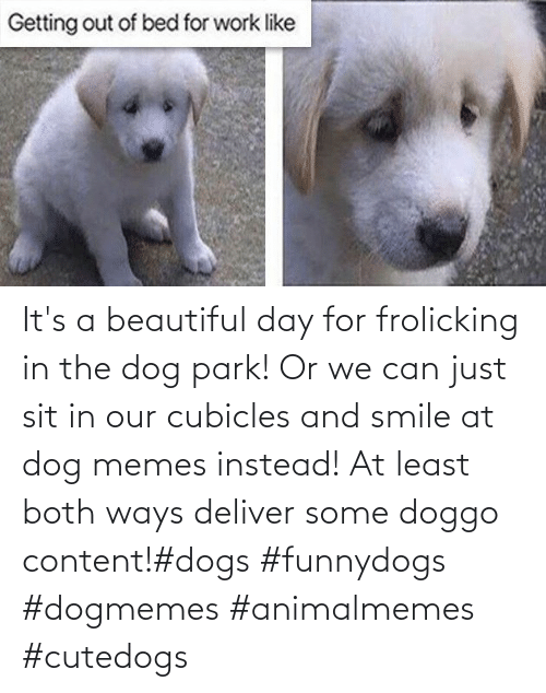 Its A: It's a beautiful day for frolicking in the dog park! Or we can just sit in our cubicles and smile at dog memes instead! At least both ways deliver some doggo content!#dogs #funnydogs #dogmemes #animalmemes #cutedogs
