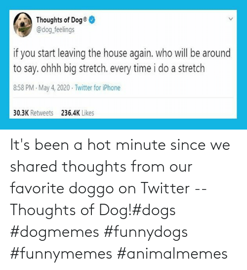 Dogs: It's been a hot minute since we shared thoughts from our favorite doggo on Twitter -- Thoughts of Dog!#dogs #dogmemes #funnydogs #funnymemes #animalmemes
