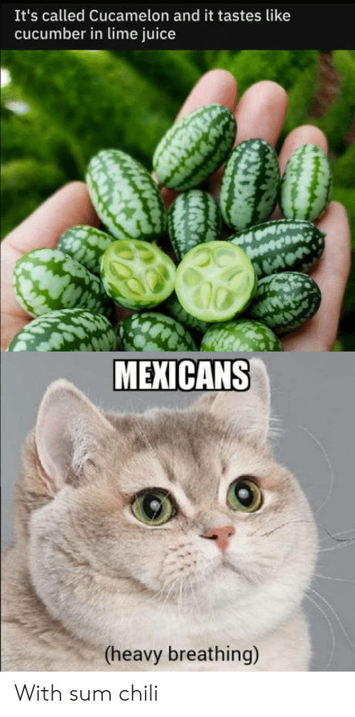 Juice, Chili, and Cucumber: It's called Cucamelon and it tastes like  cucumber in lime juice  MEXICANS  (heavy breathing) With sum chili