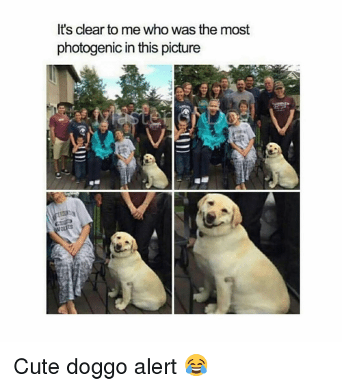 Cute, Memes, and 🤖: It's clear to me who was the most  photogenic in this picture Cute doggo alert 😂