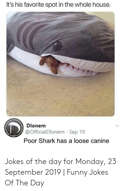 funny jokes: It's his favorite spot in the whole house.  Dlonem  @OfficialDlonem Sep 19  Poor Shark has a loose canine Jokes of the day for Monday, 23 September 2019 | Funny Jokes Of The Day
