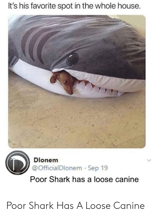Shark, House, and Sep: It's his favorite spot in the whole house  Dlonem  @OfficialDlonem Sep 19  Poor Shark has a loose canine Poor Shark Has A Loose Canine