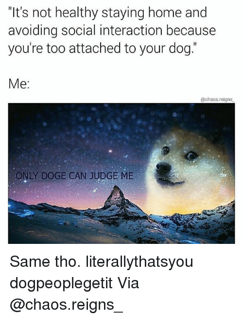 """Dogee: """"It's not healthy staying home and  avoiding social interaction because  you're too attached to your dog.  Me:  @chaos.reigns  ONLY DOGE CAN JUDGE ME Same tho. literallythatsyou dogpeoplegetit Via @chaos.reigns_"""