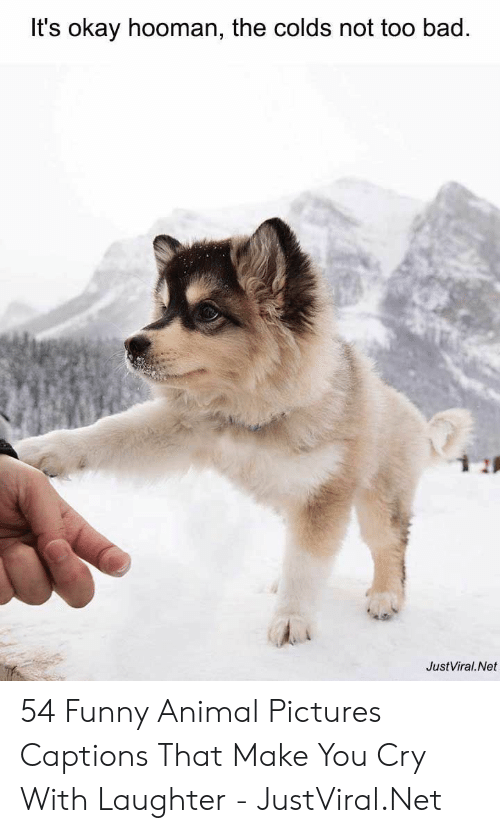 Captions: It's okay hooman, the colds not too bad.  JustViral.Net 54 Funny Animal Pictures Captions That Make You Cry With Laughter - JustViral.Net